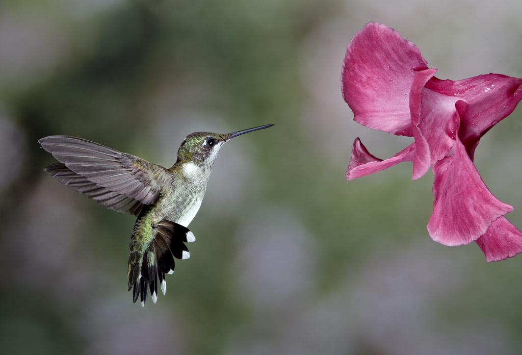 High Speed Hummingbird Photography Lowcountry